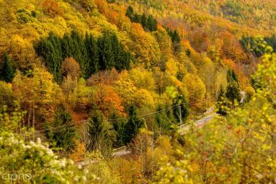 Munții noștri aur poartă