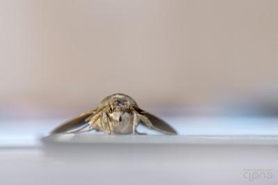 La mia molia