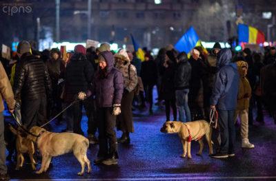 7 februarie 2017 - București, Piața Victoriei