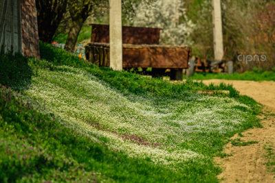 Rurală