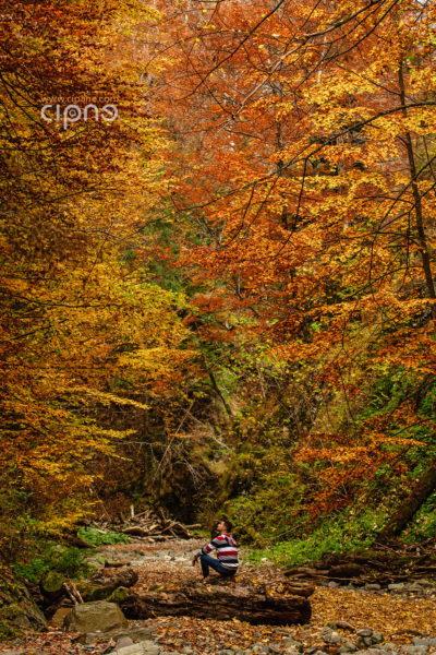 Băietul față cu pădurea