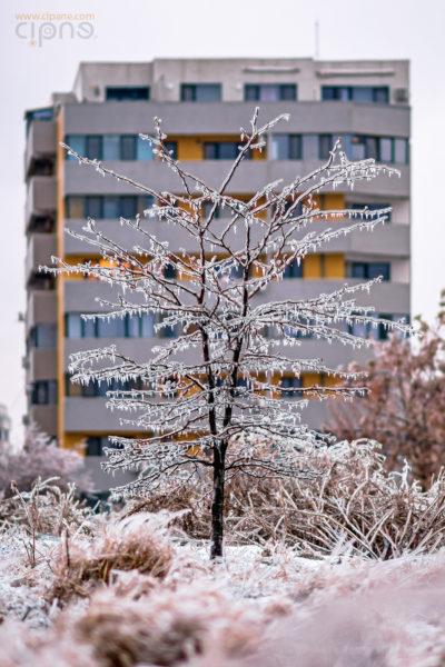 Un copac cu flori