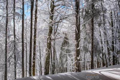 Velvet snow
