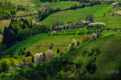 Green green grass of spring