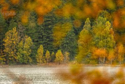 Perpetuum autumnale