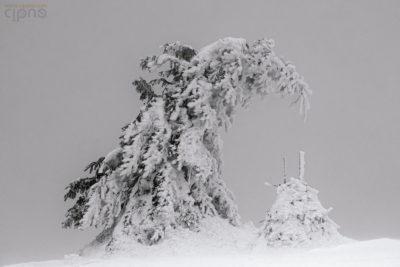 """""""- Micuțule, iarna e grea, dar e frumoasă!"""""""