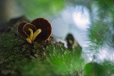 Mushroom Mantra