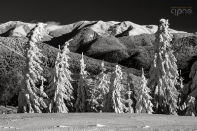Snow armada