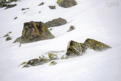 SnowFest Festival - 4 aprilie 2019 - Val Thorens, France