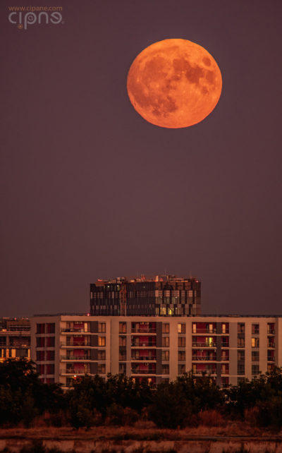 Tender moon