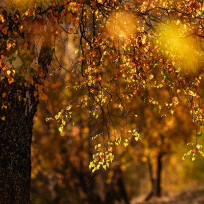 Poiana Mărului-Peștera 17-18 octombrie 2019