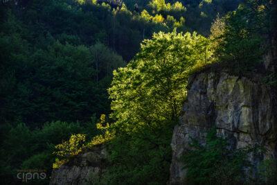 Din inima pădurii